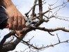 Tree Pruning / Shrub Pruning