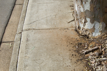 Root Damage Services