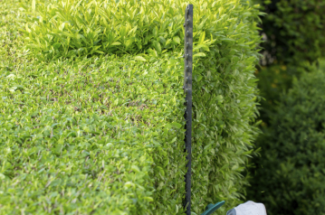 Tree and Shrub Trimming Services
